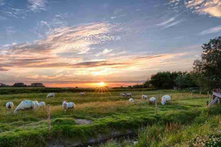 sheeps crete