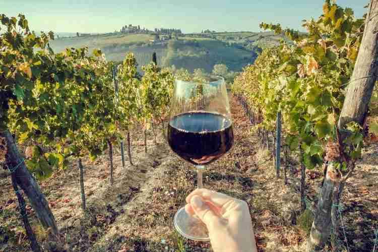wine grares crete greece